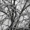 Зима:деревья